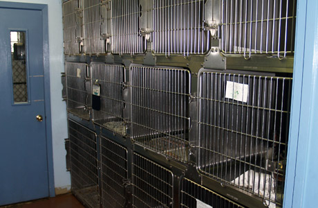 08 kennels